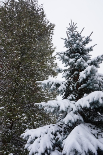 we're going to have a green christmas this year, but there was a lot of snow earlier this month